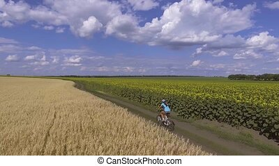 cyclist rides on blooming sunflowers field - woman cyclist...