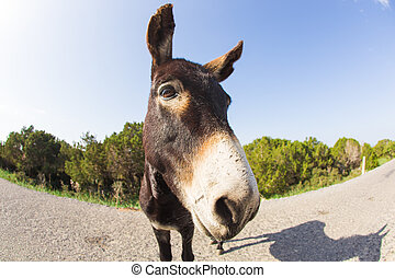 funny donkey looking at the camera, Cyprus, Karpaz National...