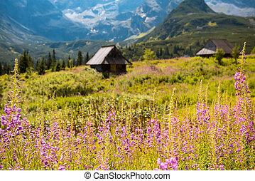 Hala Gasienicowa, Tatra mountains Zakopane Poland - Summer...