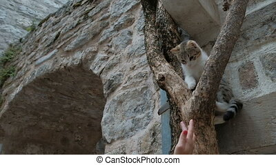 Woman playing with a cat, which sits high on a tree in the...