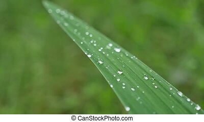 Leaves with drops of water. Can be used as background -...