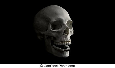 Skull Talking Loop - Side View - Human skull on black...