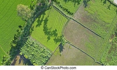 Aerial View Beautiful Green Wide Salad Fields and Ground...