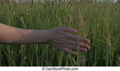 Close-up of a female hand passing through a field. Nature