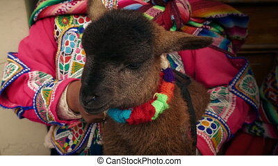 Lamb Held By South American Woman In Traditional Dress -...