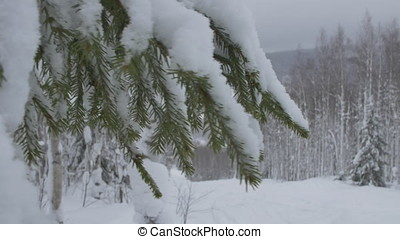 Winter Wonderland in a Pine Forest. Fantastic evening landscape in a colorful sunlight. Dramatic wintry scene