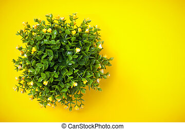 Ornamental plant shot from above on yellow background. -...