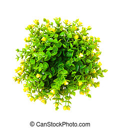 Ornamental plant with yellow buds shot from above isolated...