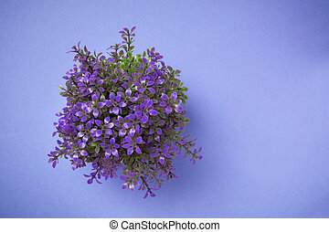 Ornamental plant shot from above on blue background. -...