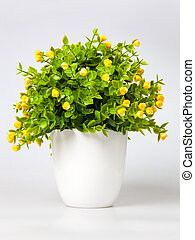 Ornamental plant with yellow flowers isolated on white. -...