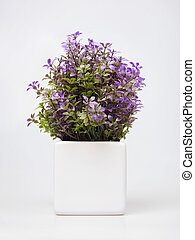 Ornamental plant with blue flowers isolated on white. -...