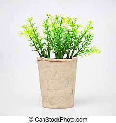 Ornamental plant in cardboard cup isolated on white. -...