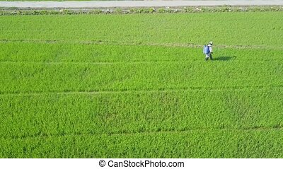 Drone Approaches Local Man Sprinkling Rice Field against...