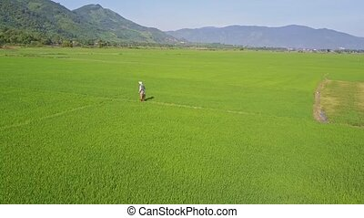 Aerial View Farmer Walks on Path among Rice Fields against Hills