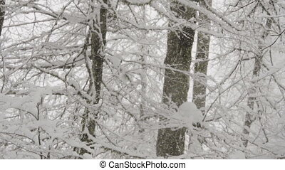 The snowboarder climbs up in Backcountry. - The snowboarder...