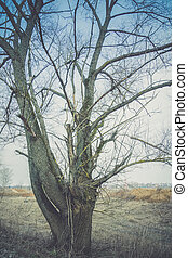 Leafless Lone Tree Filtered - Big alone tree with branches...