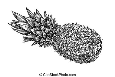 Engrave isolated pineapple hand drawn graphic illustration -...