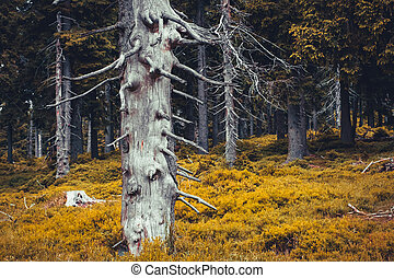 Autumn forest moody landscape with dry tree and colorful foliage