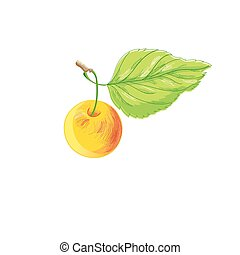 Illustration of a bright apple