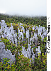 Limestone pinnacles at gunung mulu national park - limestone...