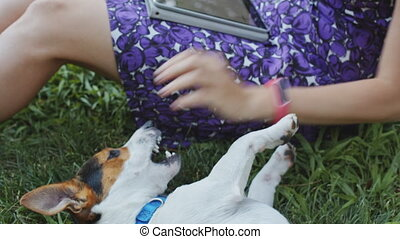 Woman playing with dog on grass - Crop woman stroking and...