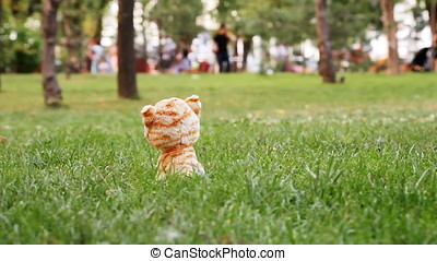 Lonely Plush Toy - Lonely plush toy sitting in park grass at...