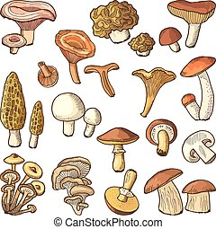 Colored nature vector illustrations of mushrooms. Truffles,...