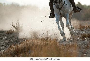 In prairies - Rider on a spanish horse running gallop