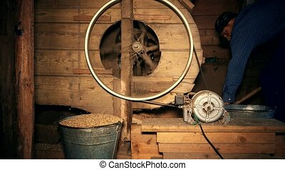 Young man hard working on grain sifting on seasonal harvest...