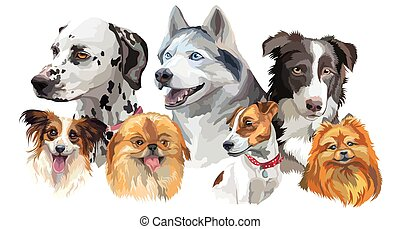 Different dog breeds set - Set of colorful vector portraits...