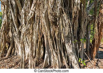 Jungles Vines in Mexico