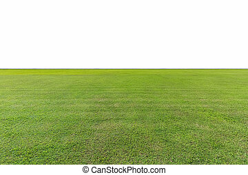 green lawn isolated