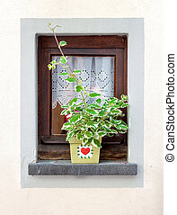 Window decorated with flower pot at summer