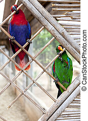A pair of macaw parrots sit on a branch in the zoo. - A pair...