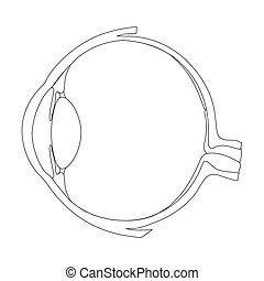 Human eye structure scheme medical vector illustration....