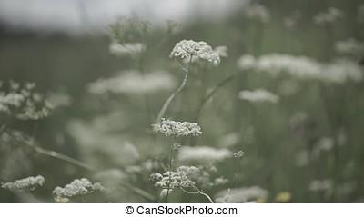 Close up wild flower in field. Wild flowers growing on green meadow