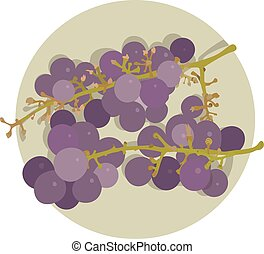 two bunches of  purple grape