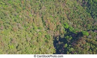 Fantastic Aerial View Tropical Forest in Highland in Vietnam...