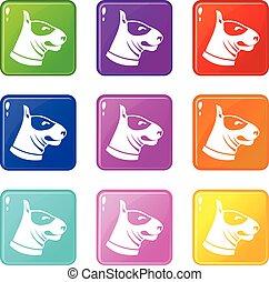 Bull terrier dog icons 9 set - Bull terrier dog icons of 9...