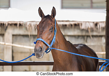 Racehorse - Horses in the race waiting for the race.