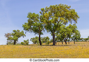 Cork trees in a farm field in Vale Seco, Santiago do Cacem,...