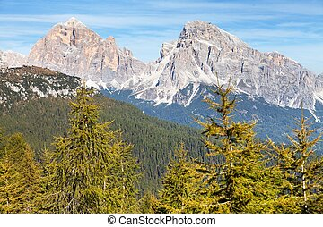 Larch wood and Le Tofane Gruppe, Dolomiti, Italy