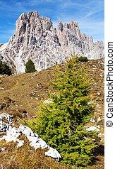 Larch wood and Cima Ambrizzola and Clroda da Lago, tIalien...