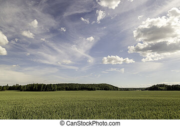 Wheat Field with trees and a partly cloudy sky.