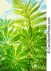 Exotic plants, fern leaves, artistic background