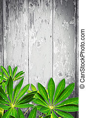 Wooden background with green exotic leaves
