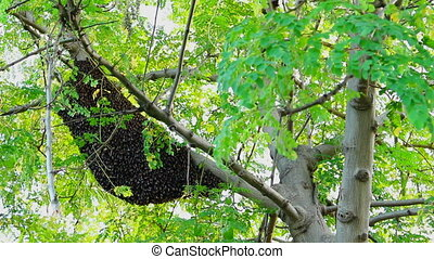 Bees In Nest On Tree