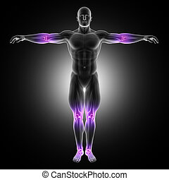 3D male medical figure in standing pose with joints...