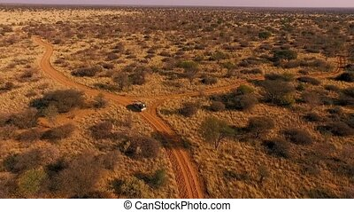 The SUV is driving along the trail in the savannah of...