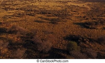 Aerial: The savannah of Namibia at sunset. Panorama of the...